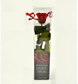 Růže balená mini