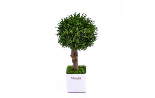 Stromeček Stoebe - 9