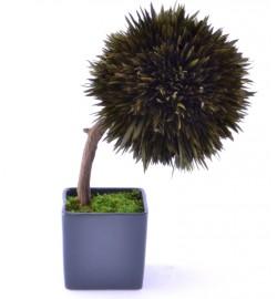 Stromeček Salignum - 8