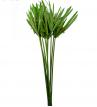 Papyrus - PAP 0105
