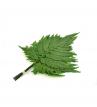 Plume fern - FPL 9102